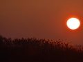 Sonnenaufgang Kienitz an der Oder