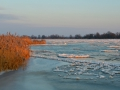 Sonnenaufgang, Kienitz an der Oder